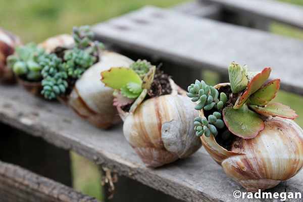 DIY Mini Gardens That Grow Inside Your Favorite Seashells