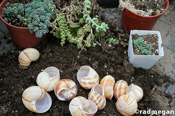 Shells Turned Into Planters