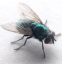 A Fly Doing A Somersault: Award-Winning 16 Second Video