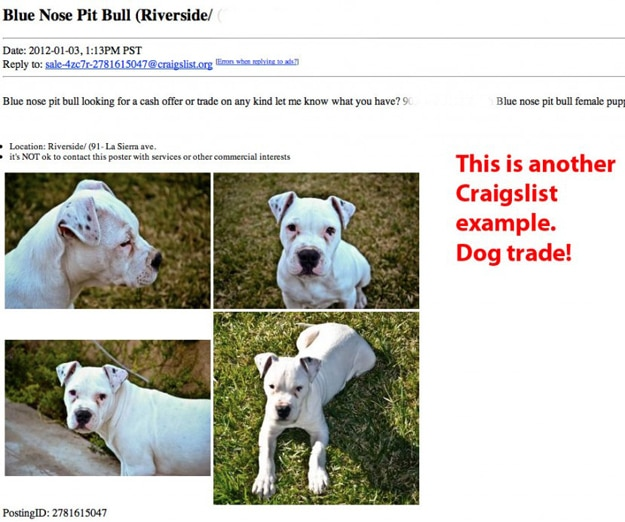 Animal Lovers: Be Careful & Aware When Using Craigslist