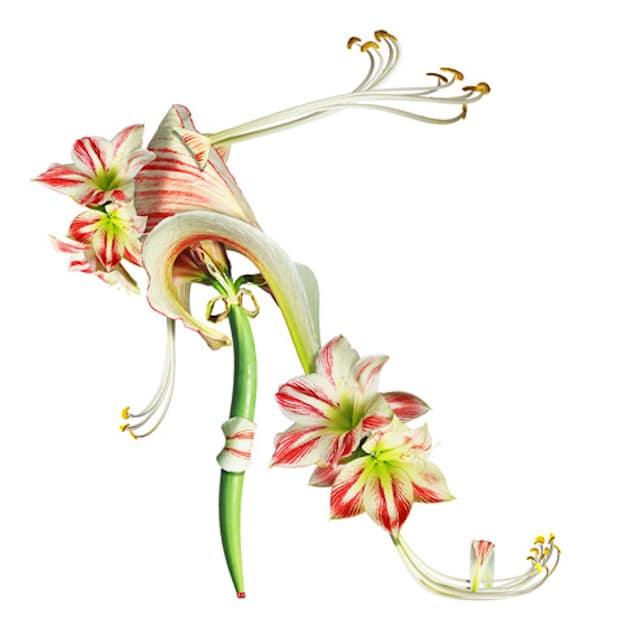 Beautiful-White-Flower-Botanical-Shoe