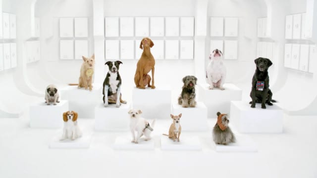 Volkswagen's New Ad Hit: The Star Wars Theme Barked By Dogs