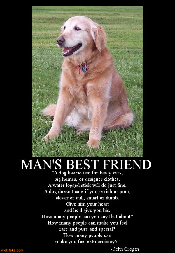 A Special Tribute To The Loyal Dogs In Our Lives [15 Pics]