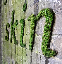 How To Create Green Moss Wall Graffiti [Infographic]