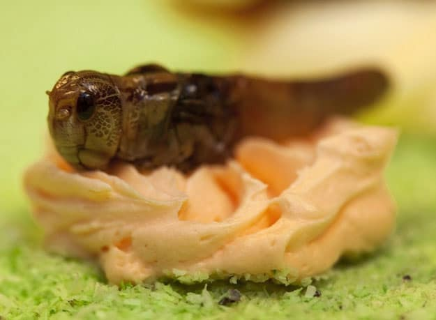 Cupcakes-Made-With-Live-Insects