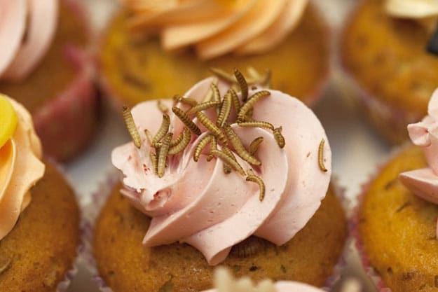 Cupcakes-Made-With-Insects