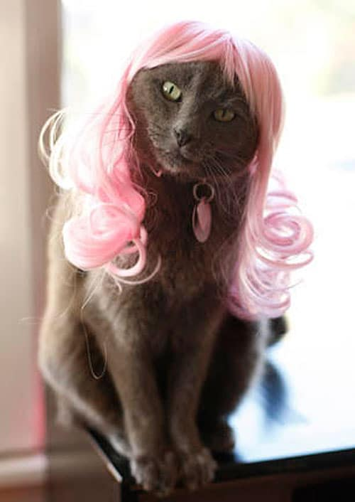 Kitty-Cat-Wig-Designs