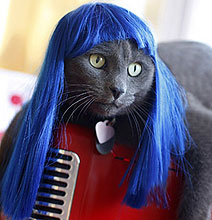 Cat Wigs: For Cat Lovers Who've Officially Gone Nuts