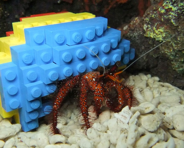 hermit-crab-lego-house