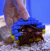 Hermit Crab Ditches Shell For A Lego Shell