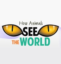 How Dogs, Cats & Other Animals See The World [Infographic]