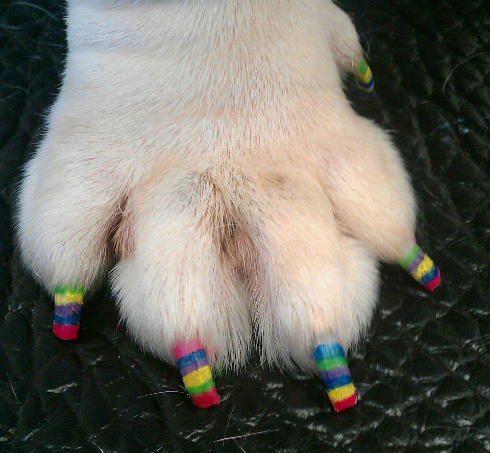 Strange-Dog-Pedicure-Designs