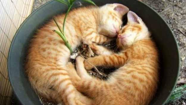 flower pot full of sleeping cats