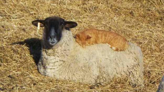 barnyard fun wool cat bed