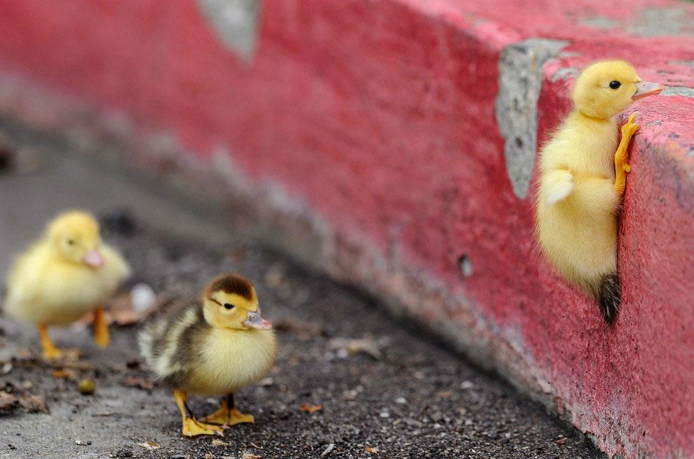 Best-Duckface-In-The-World