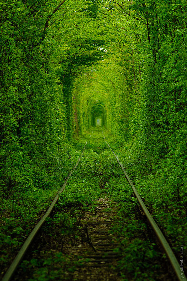 Leafy-Natural-Tunnel-In-Ukraine