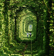 The Leafy Tunnel Of Love: A Natural Beauty You Have To See