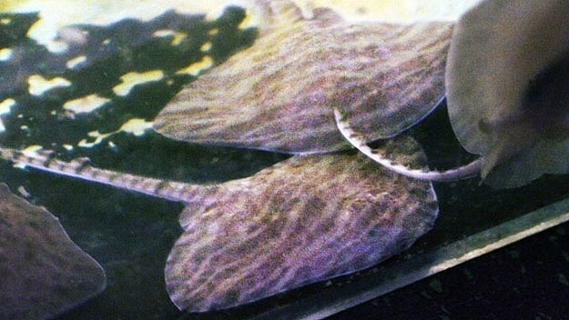 fish-tank-stingrays-swimming-sneakers
