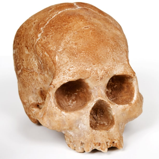 life-size-chocolate-skulls