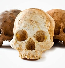 Life-Size Chocolate Skulls For The Morbid Chocolate Lover