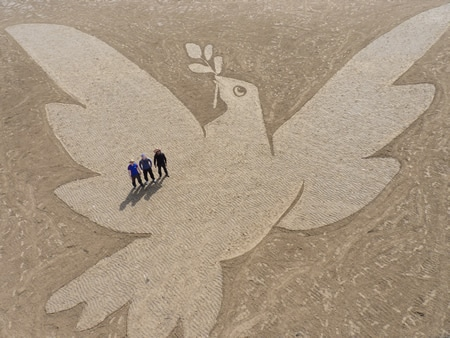 beach art bird peace
