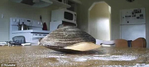It Turns Out Clams Don't Like Salt After All [Viral Video]