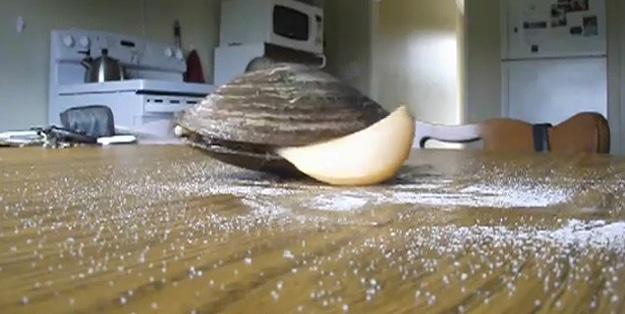 Clam-Eating-Salt-Video