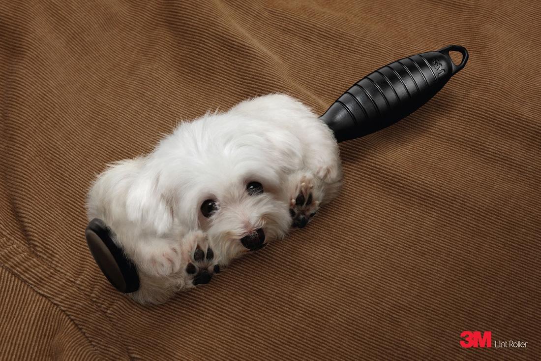 Lint-Roller-Dog-Advertising