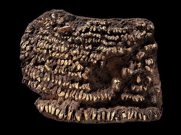 World's Oldest Handbag: Decorated With Teeth Instead Of Diamonds