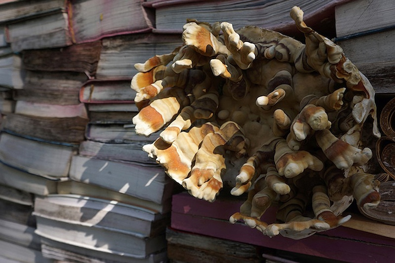 Unusual Book Art: A Display Of Rotting, Decomposing Books