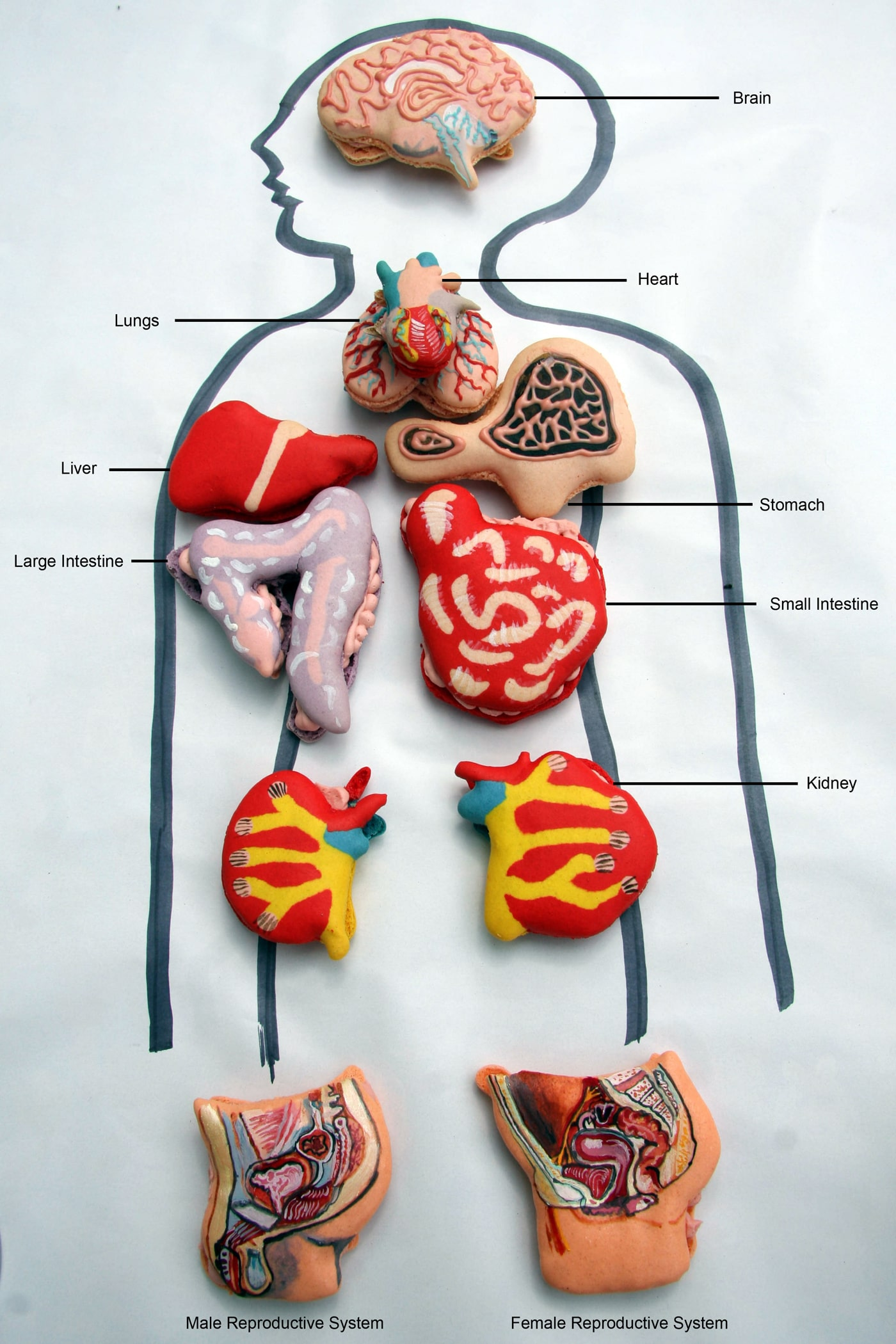 Anatomically Correct Human Organ Pastries & Chocolate Teeth