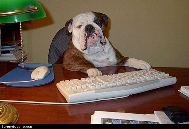 Dog-Proof-Your-Computer
