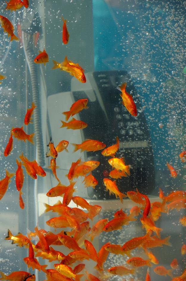 Goldfish-Aquariums-Phone-Booth