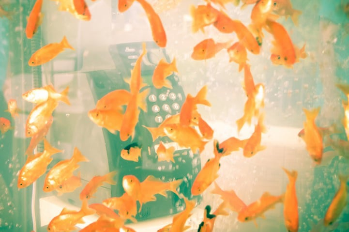 Goldfish-Aquariums-Phone-Booth