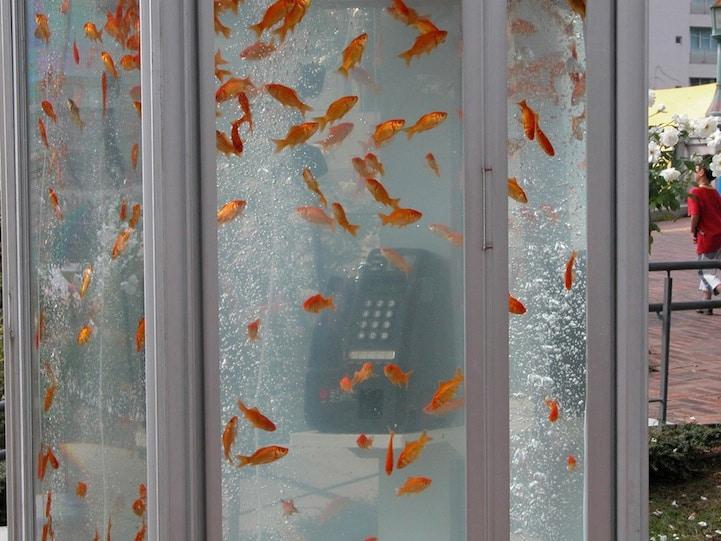 Goldfish-Aquariums-Phone-Booth-Aquarium