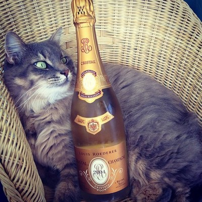 Cats-Living-Life-Of-Luxury