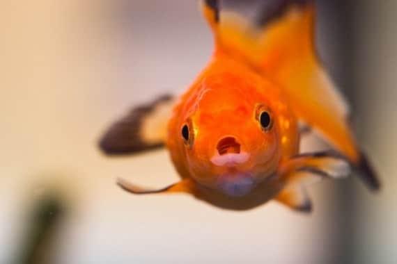 Fish Tank Bank Article Image