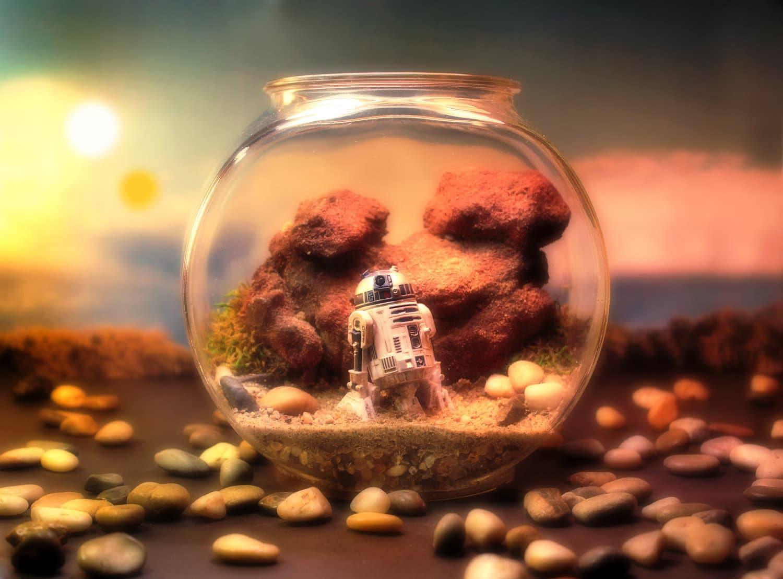 star-wars-world-terrariums