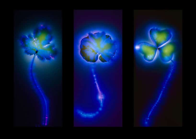 unusual-flower-art-electrocuted-flowers