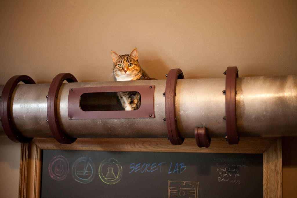 Creative Cat Transportation System For Your Home Office