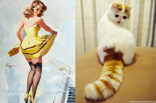 daily-cute-cats-pinup-girls