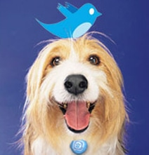 Pets Who Are Famous On Twitter, Facebook & YouTube [Infographic]