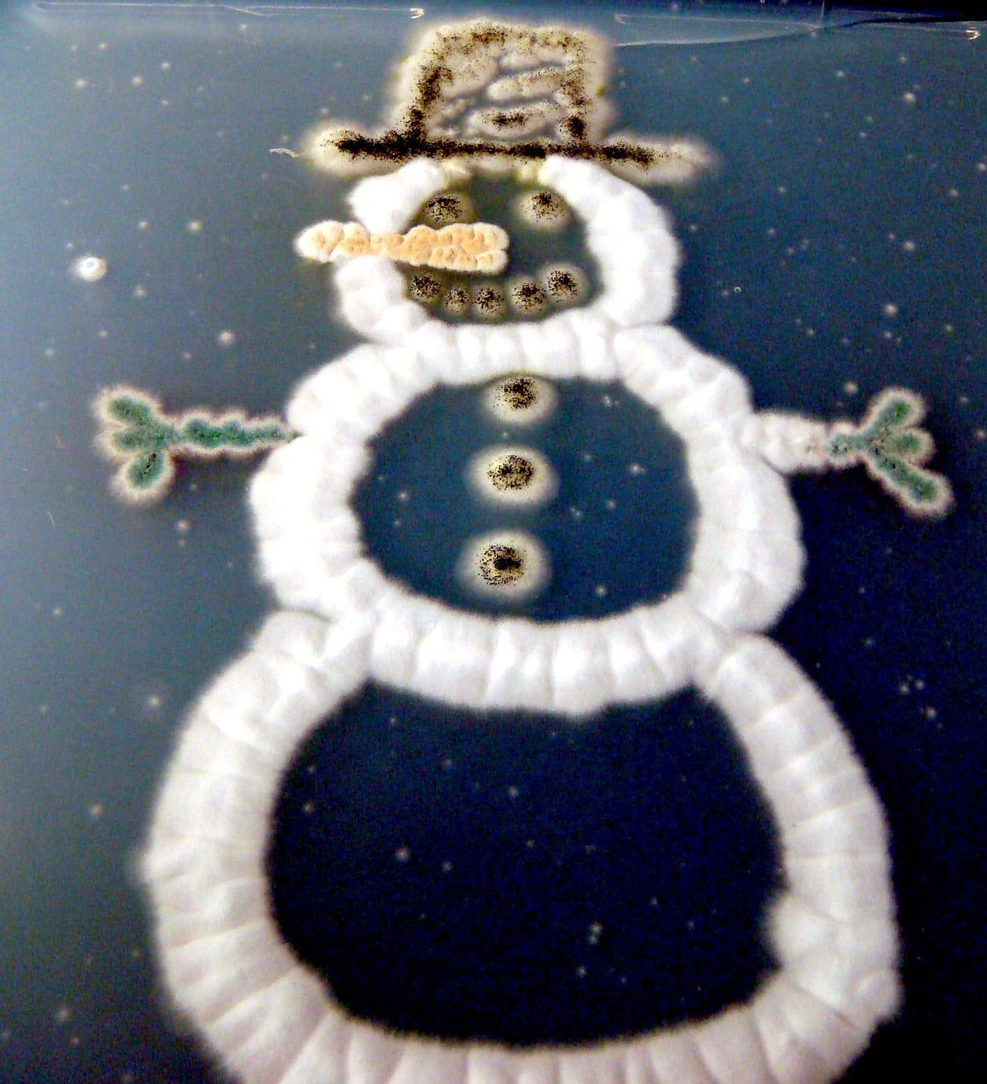 snowman-created-in-petri-dish
