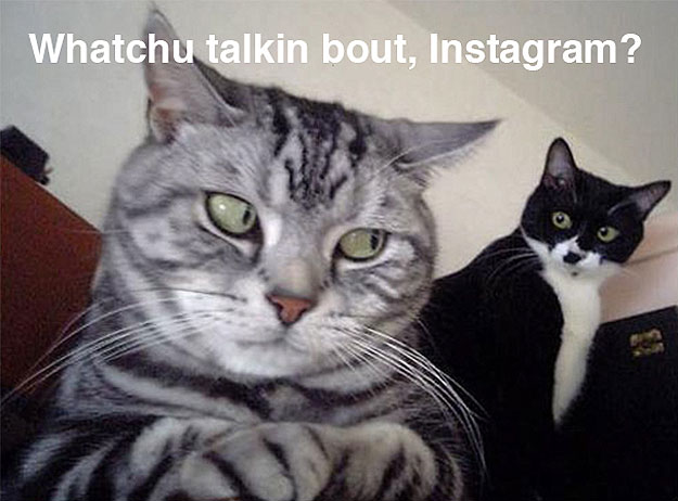 instagram-privacy-policy-cats-image