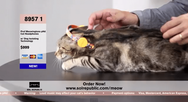 Cat Headphones Are The Latest In Cat Fashion From Sol Republic