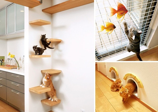 your-cats-dream-home
