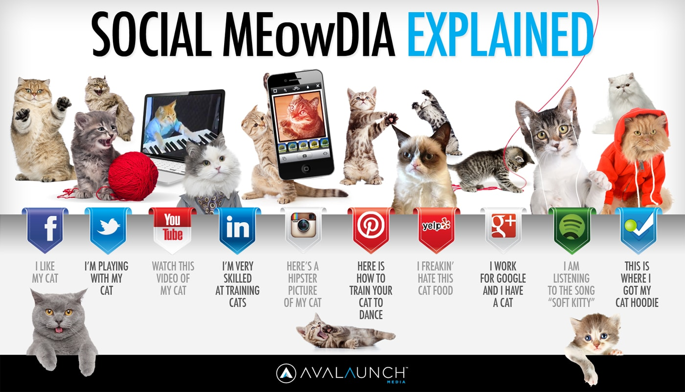 social-media-sites-explained-cats
