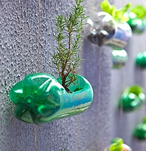 Spunky Urban Wall Garden Created From Recycled Plastic Soda Bottles