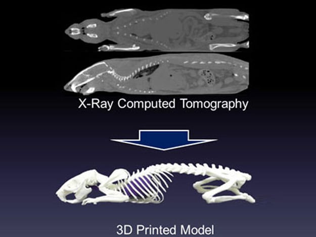3d-printed-animal-skeleton