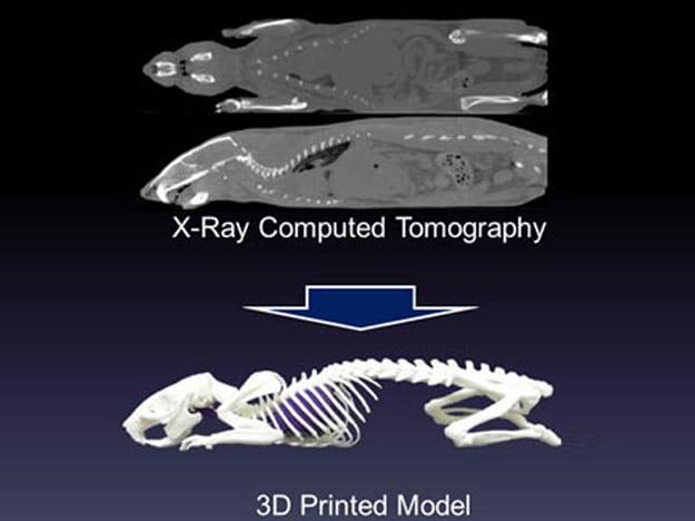 3d-printed-animal-skeleton
